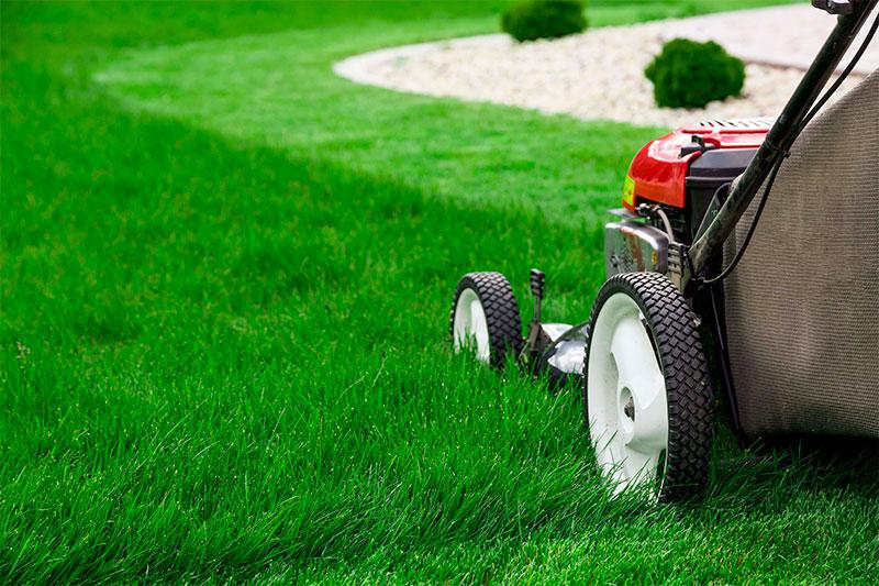 parametri vibora gazonnoi travi
