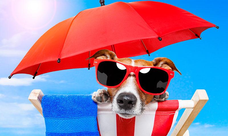 Как выбрать солнцезащитные очки правильно рейтинг лучших фирм