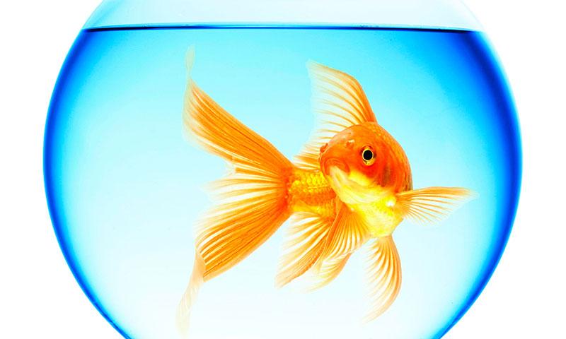 Кого можно завести в аквариуме кроме рыб