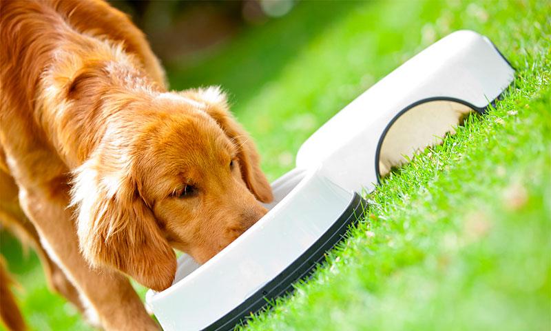 Девять лучших кормов для собак
